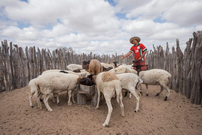Projeto Do Governo Do Estado Para O Desenvolvimento Rural é O Melhor Do Mundo Em Ranking Da ONU