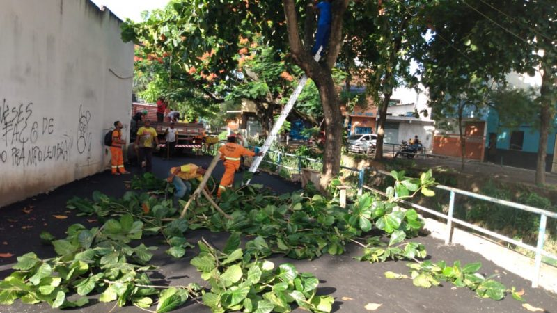 Prefeitura Intensifica Serviços De Poda De árvores No São Caetano