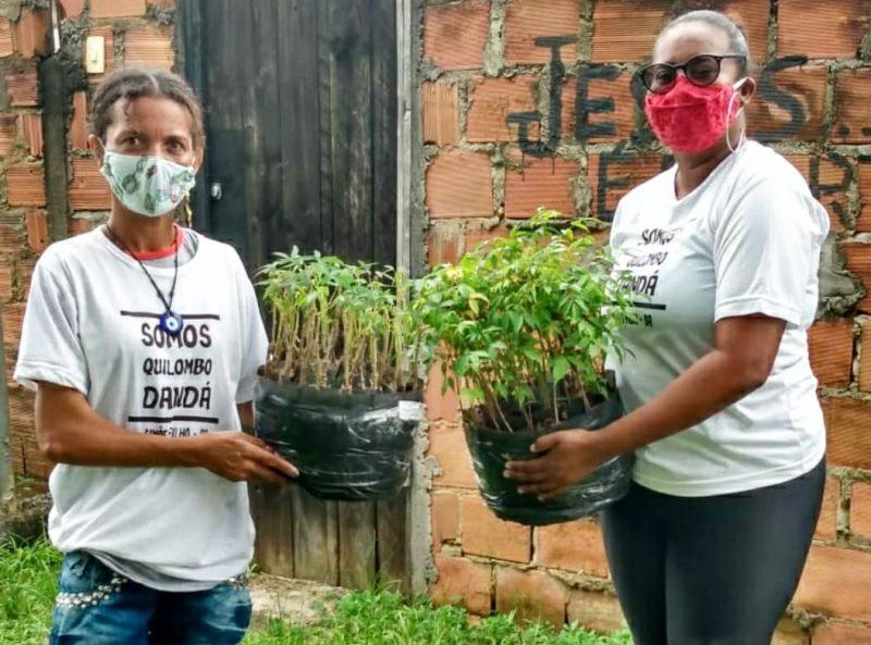 Mais 72 Mil Mudas Da Biofábrica Da Bahia Chegaram A Agricultores Familiares No Mês De Abril