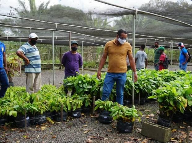 Biofábrica da Bahia e SDR entregaram mais de 50 mil mudas na primeira quinzena de abril